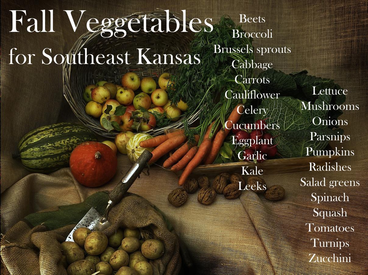 Fall seasonal vegetables