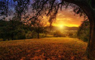 dawn circadian rhythm